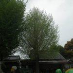 カラスの巣撤去(保育園・岡崎市)