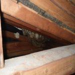 ミツバチの駆除・巣の撤去(一般住宅・豊橋市)※岡崎市、豊田市、安城市も対応します。