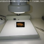 同定検査(食品工場、安城市)※岡崎市、豊田市、豊橋市、名古屋市も対応します。