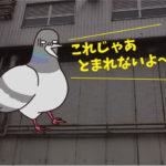 ハトの侵入防止施工<防鳥ネット編>(食品工場・岡崎市)※名古屋市、豊田市、豊橋市も対応します。