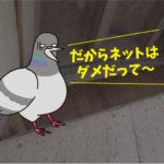 ハト飛来防止施工(大型施設・豊橋市)※名古屋市、豊川市、田原市も対応します。