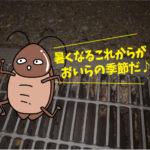 ゴキブリ駆除点検  (居酒屋・岡崎市)※豊橋市、豊田市、安城市も対応します。
