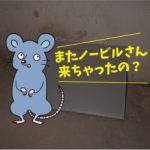 ネズミ駆除点検 (倉庫・豊橋市)※豊川市、豊田市、安城市も対応します。