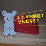 ネズミ駆除点検(社員寮・豊橋市)※豊川市、豊田市、安城市も対応します。