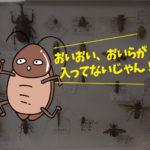 虫標本の思い出