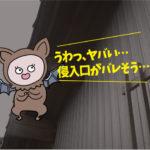 コウモリ調査(岡崎市・個人宅)※安城市、西尾市、豊川市も対応します。
