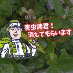 植栽の害虫防除(病院・東三河)※豊橋市、豊川市、岡崎市、豊田市も対応します