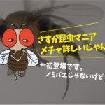 飲食店などの捕虫器に捕まった虫 その①(ノミバエ類)