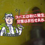 昆虫モニタリング② タマバエ類(豊橋市・食品工場)