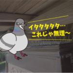 ハトの飛来防止施工(個人住宅・豊橋市)※名古屋市、豊田市、安城市も対応します。