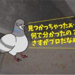 ハト飛来防止施工(公共施設・豊橋市)*名古屋市・岡崎市・碧南市・安城市・豊川市も対応します。