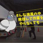 ハト飛来防止施工(大看板・豊橋市)※豊橋市、岡崎市は無料で調査見積します。