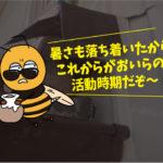 スズメバチ駆除(一般住宅・豊橋市)※豊橋市、岡崎市は調査無料です。