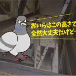 ハトの糞害対策(運送会社:新潟県出張)※名古屋市・刈谷市・安城市も対応します。