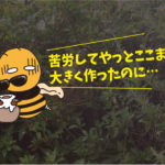 スズメバチ駆除(学校施設・豊橋市)※岡崎市、豊田市、安城市も対応します。
