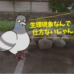 ハト糞清掃(東三河・元社員寮)*愛知県岡崎市、豊橋市は無料で調査・お見積りします。