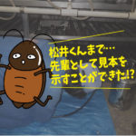 ゴキブリ駆除施工(某旅館・蒲郡市)※豊橋市、岡崎市は無料で調査見積します。