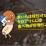アリ駆除調査(岡崎市)※豊橋市、岡崎市は調査無料です。