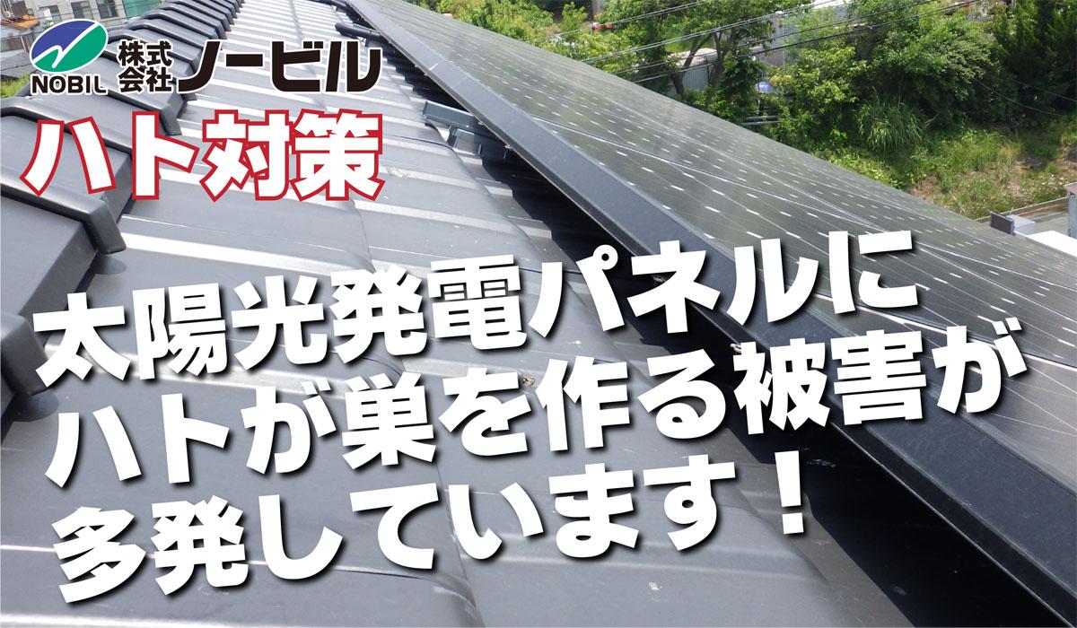 hato-top-img-02-2